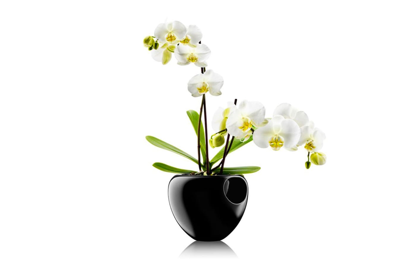 Orchid Pot by Eva Solo