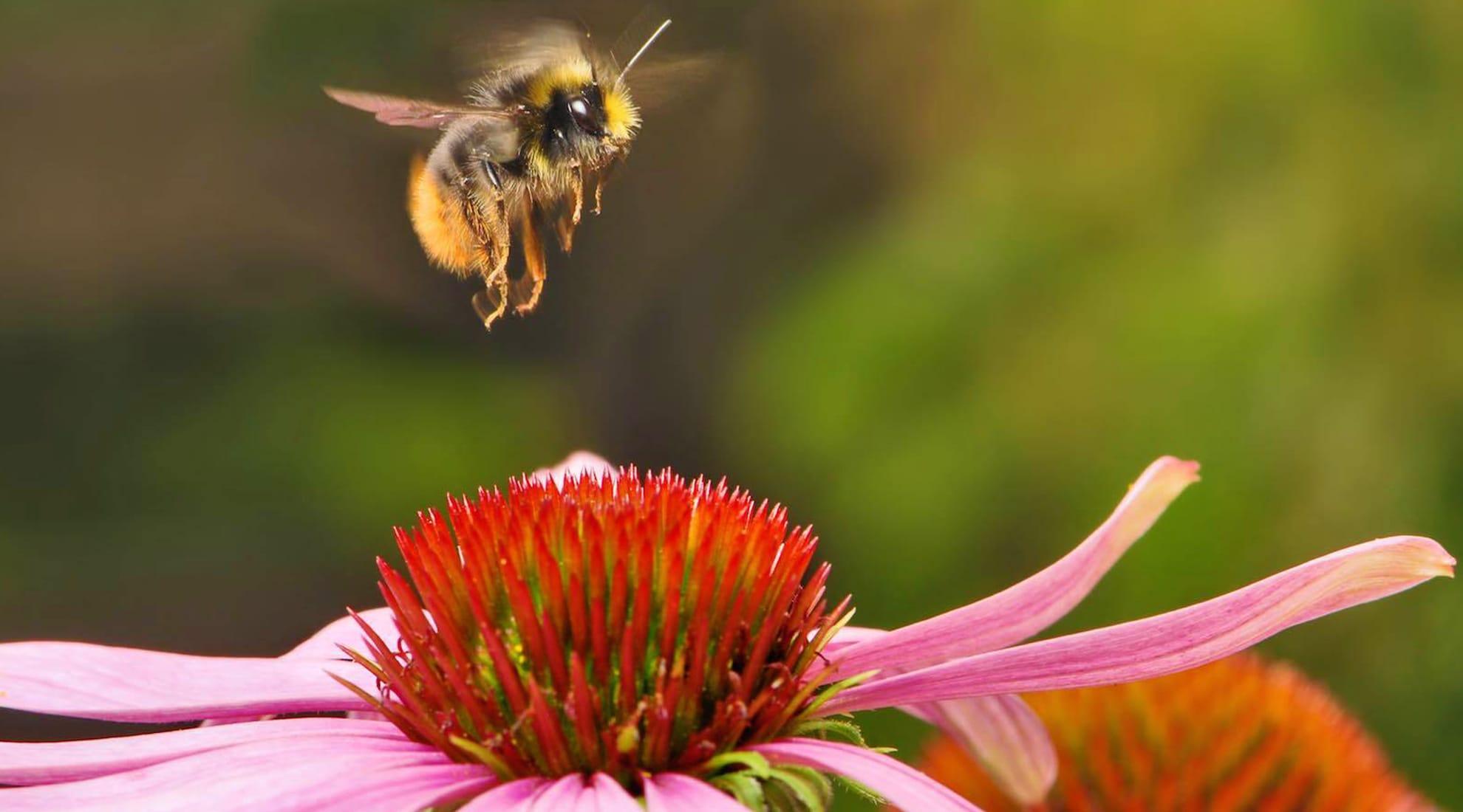 Photo via Honeybee Conservancy