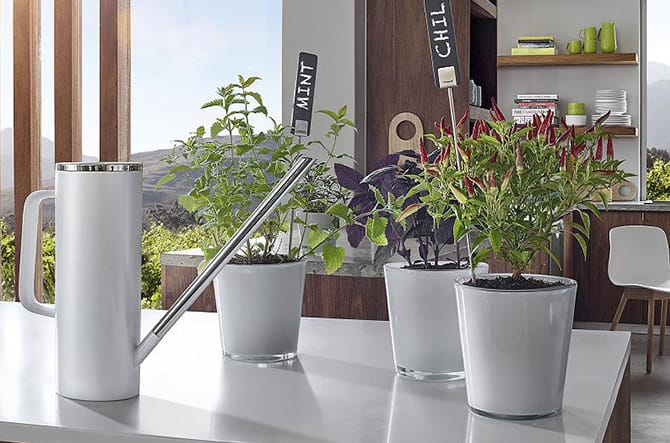 PLANTA Plant Sign Set of 4 by Blomus