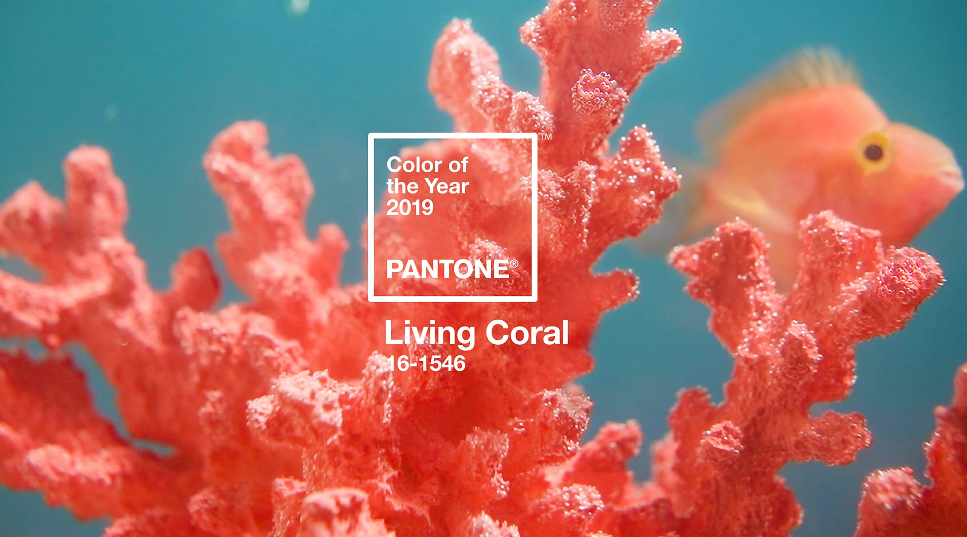 2019 Color of the Year: Living Coral