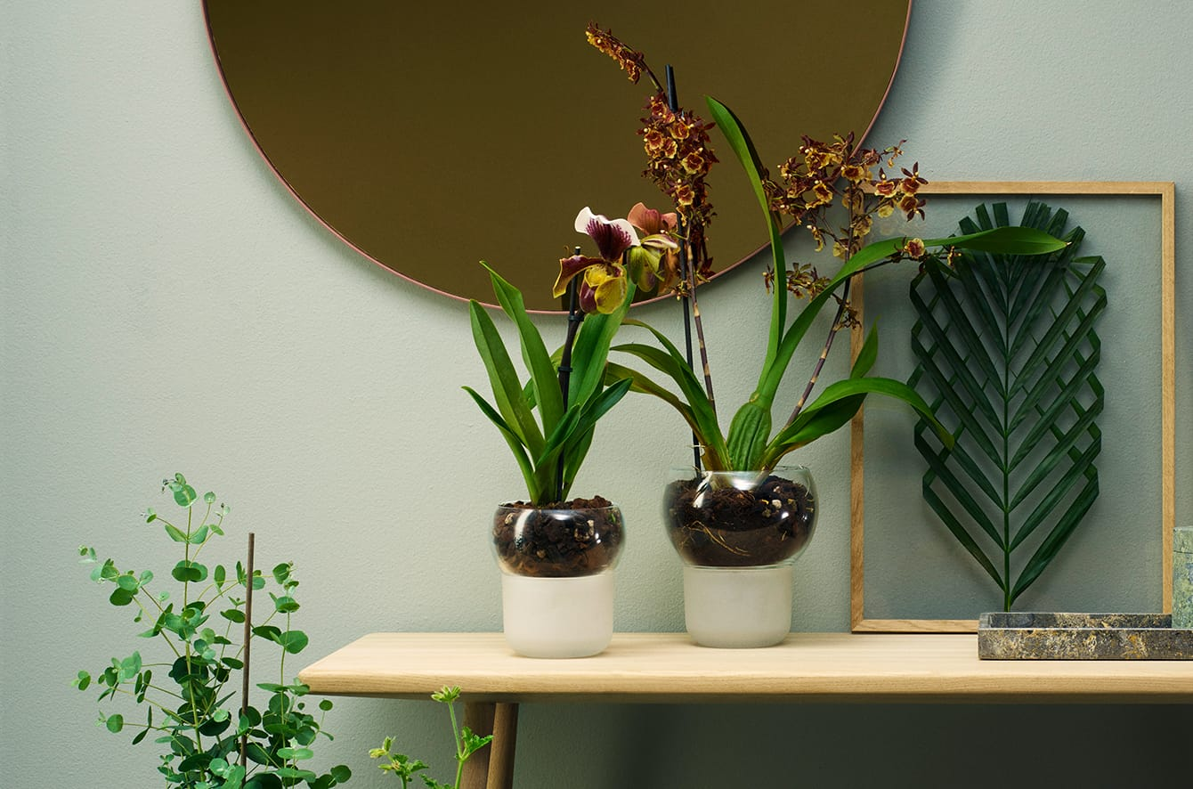 Self Watering Orchid Pot by Eva Solo